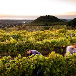 Sunrise_during_the_harvest_in_Etna_vineyards_2